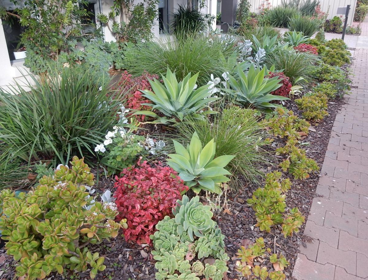 Las crasas que se cultivan en el jardín crecen algo mejor