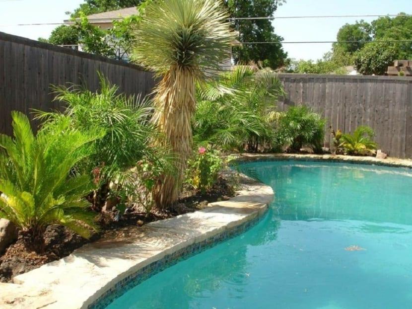 colocación de palmeras en las piscinas
