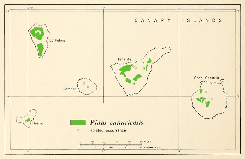 Distribución del pino canario