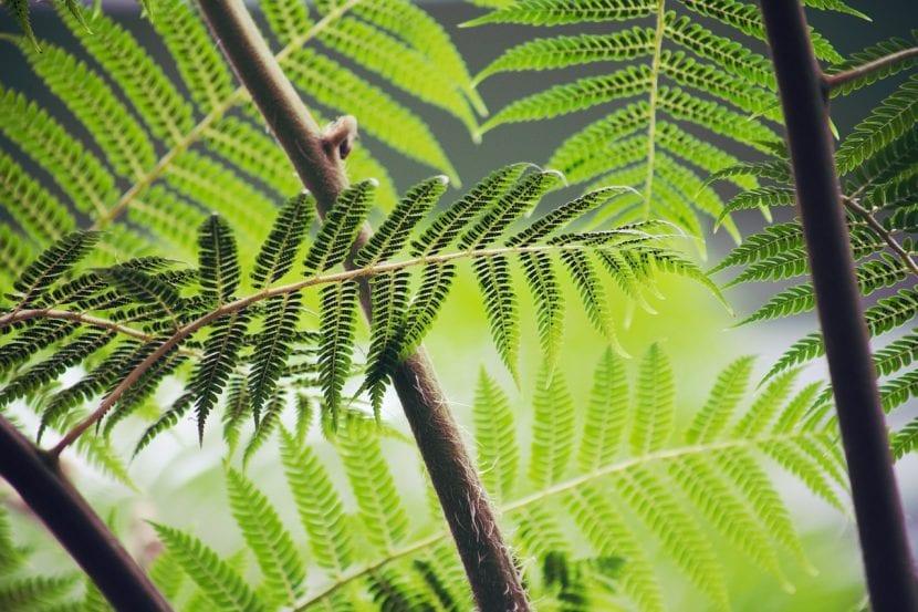 Qu son las plantas vasculares - Cuales son las plantas con flores ...