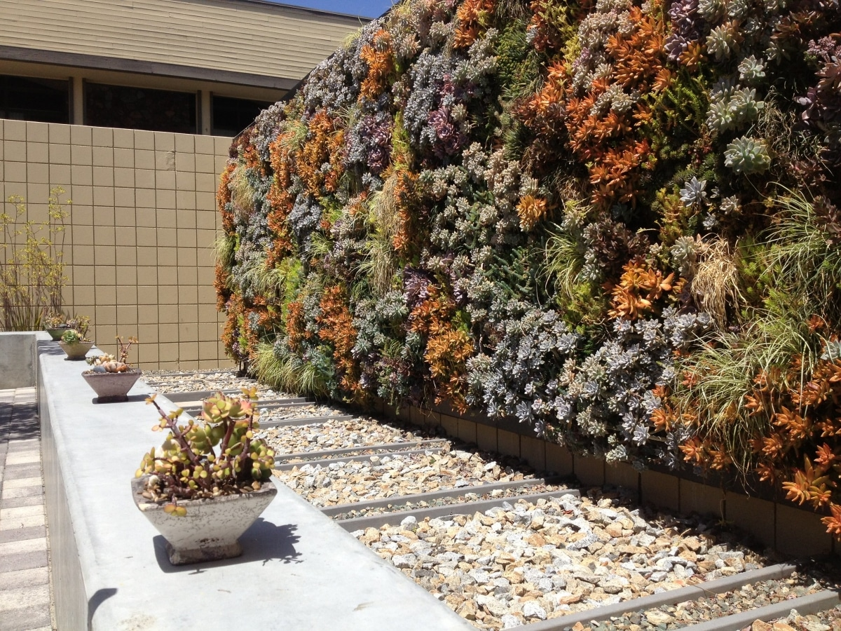 Cultiva plantas crasas en un jardín vertical