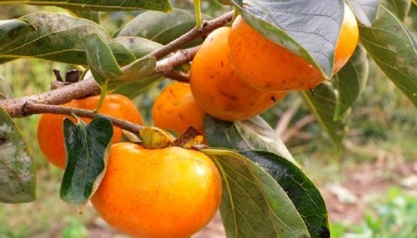 deliciosa fruta
