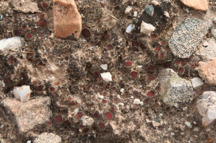 mineral como componente