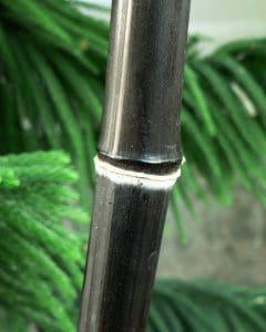 El bambú negro crece muy rápido
