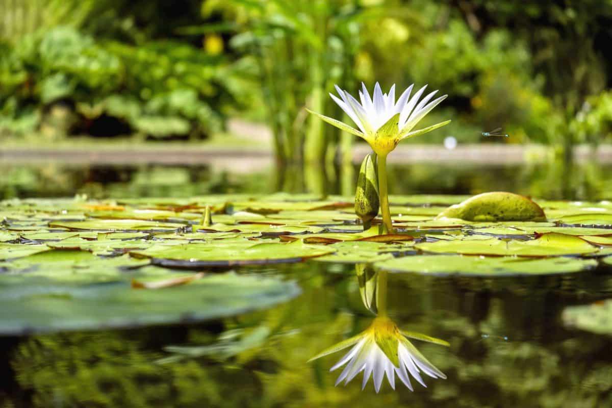 Las plantas acuáticas viven en el agua