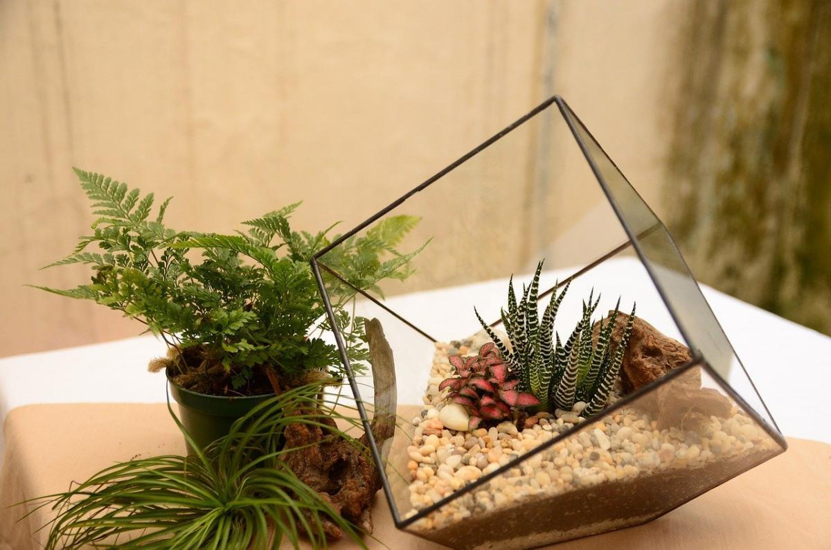 Las plantas crasas crecen bien en espacios reducidos