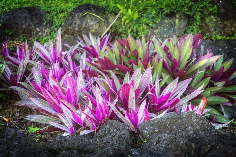 Plantas tropicales en un jardín