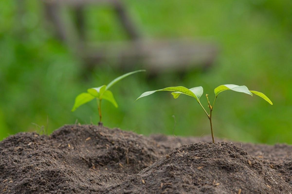 Las plantas pueden tardar mucho en llegar a la edad adulta