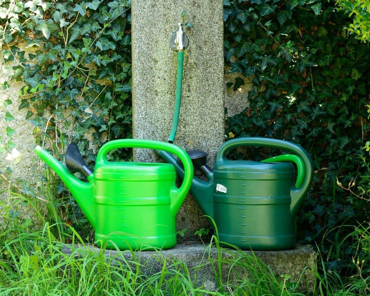 Hay muchos tipos de sistemas de riego para cultivar plantas