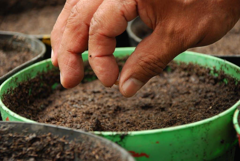Sembrar semillas en una maceta