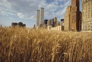 cultivar en ciudad