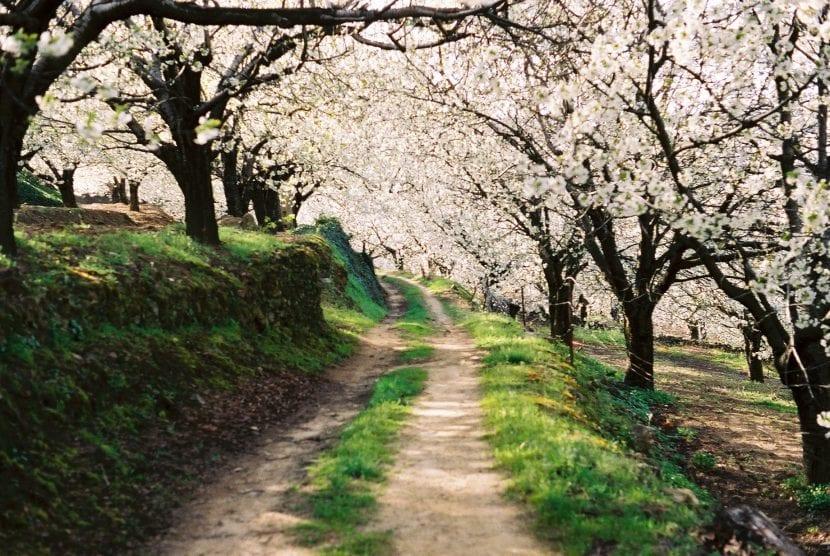 Camino del Valle del Jerte