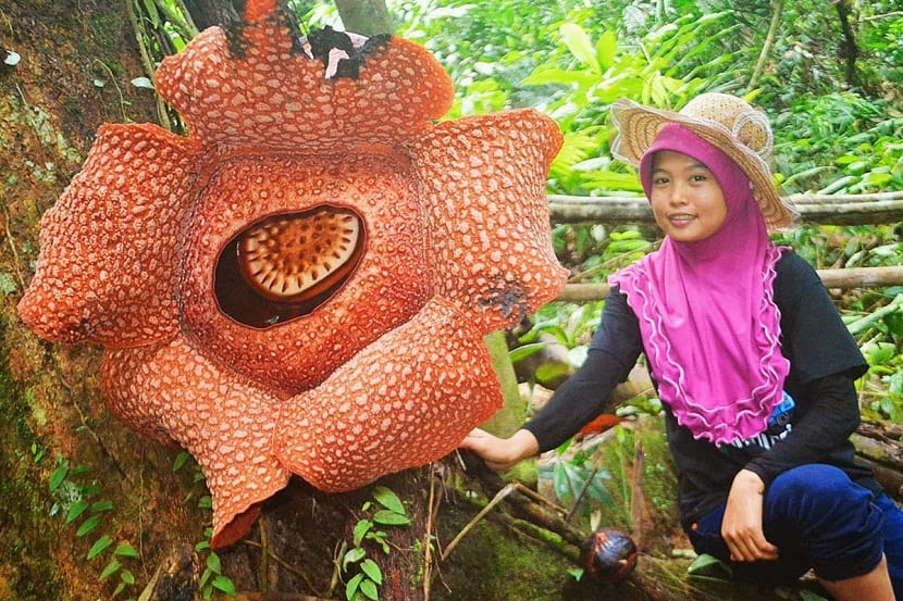 la flor mas grande del mundo