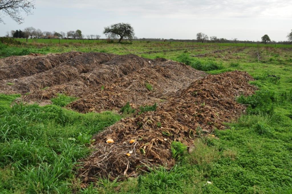 Abono orgánico sobre el terreno