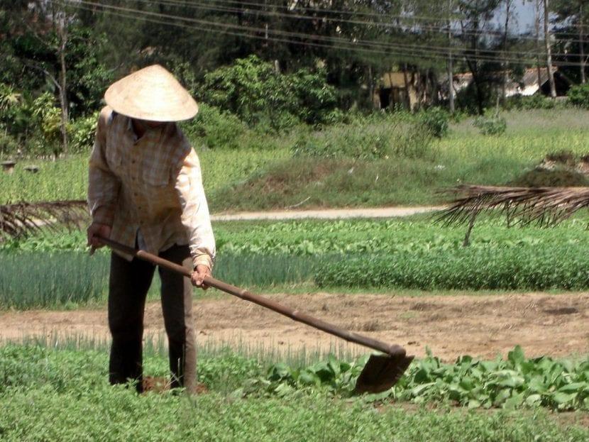 Hombre quitando las hierbas con azada