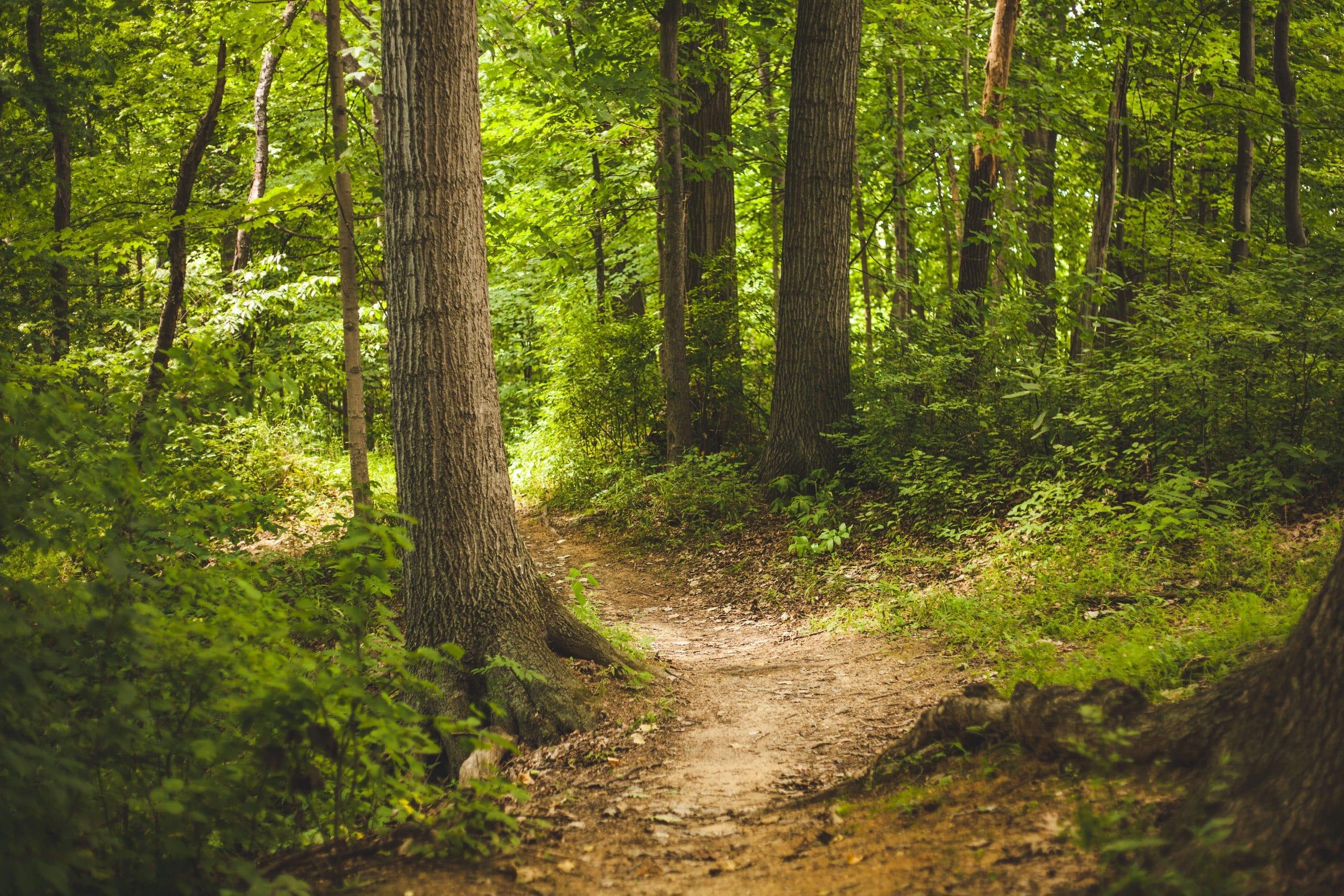 Precioso bosque natural