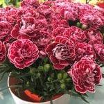 Flores de claveles en un centro