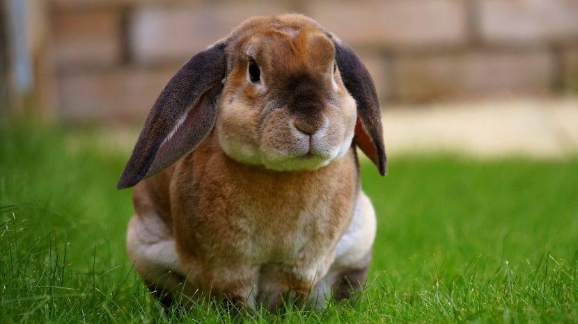 Conejo en un jardín