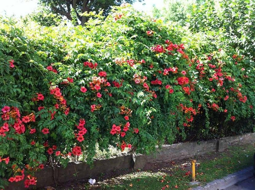 jardin lleno de plantas