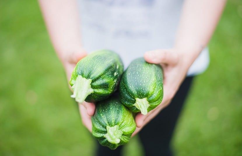 como sembrar calabacin