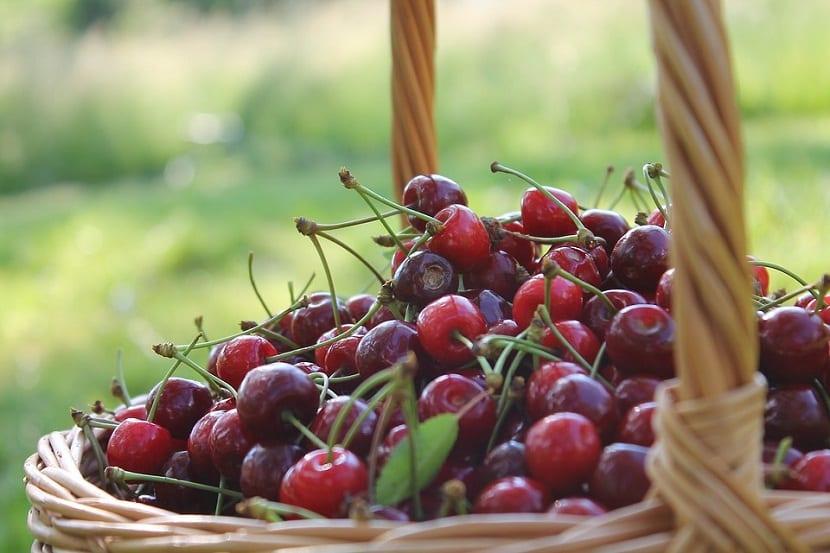 cultivar cerezas en casa