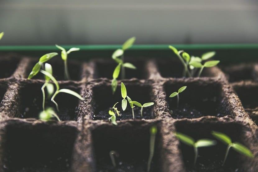 la siembra y el cultivo en casa