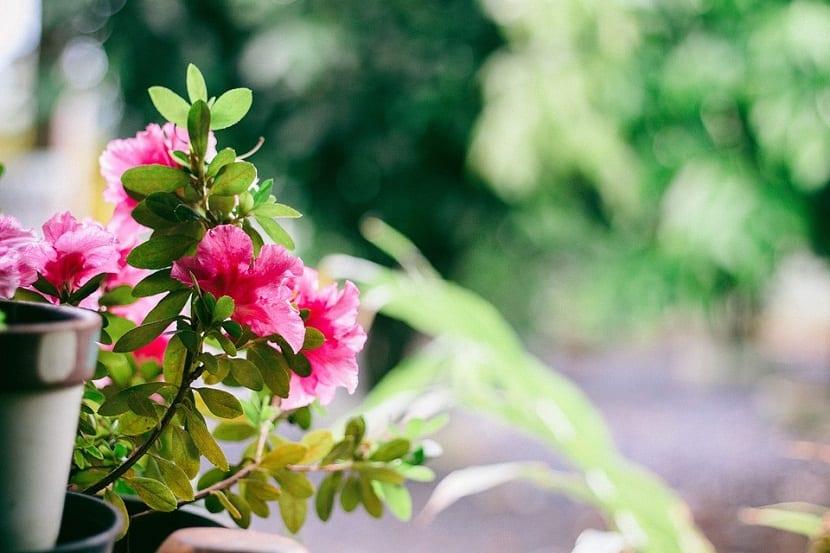decora tu balcon o terraza con flores y plantas