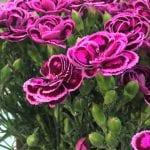 Flores en el jardín Keunkheof