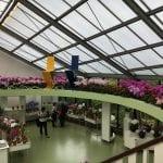 Flores en el invernadero de Keunkheof
