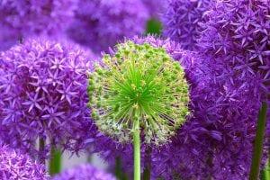 flores que se ven en junio