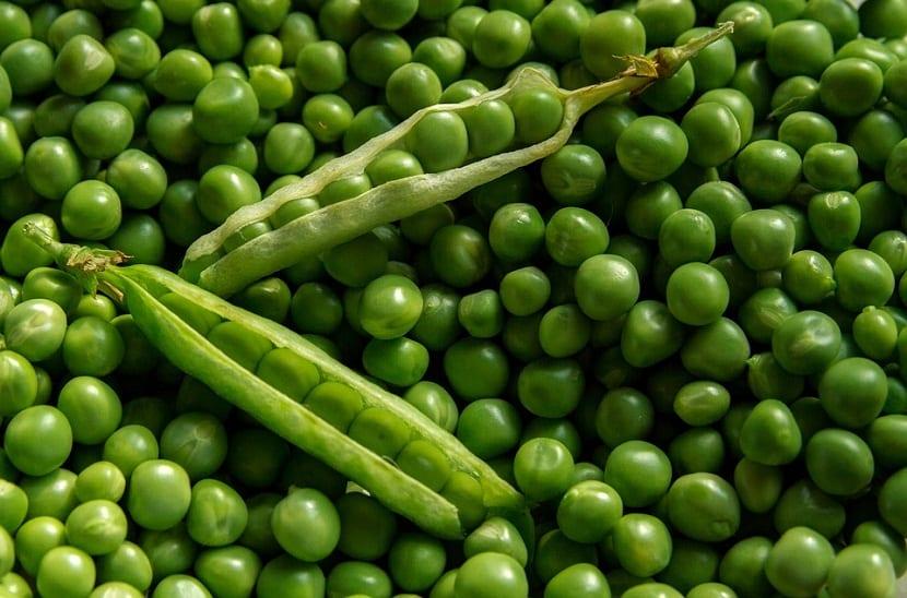 hortaliza de semilla
