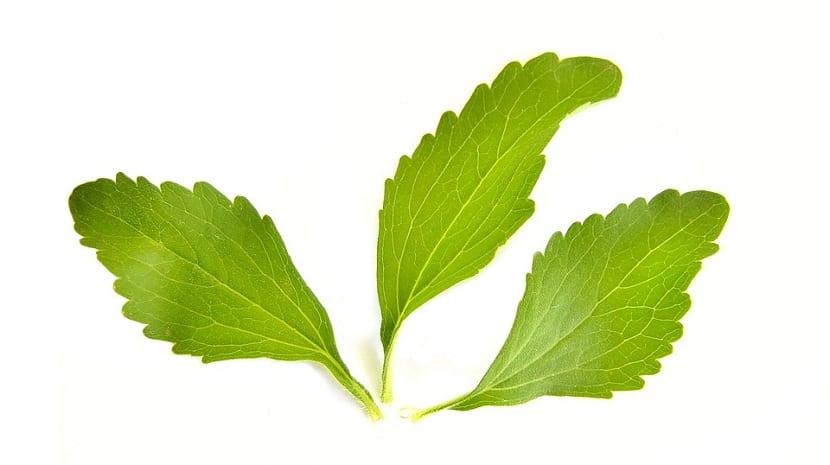 estas son las hojas de stevia
