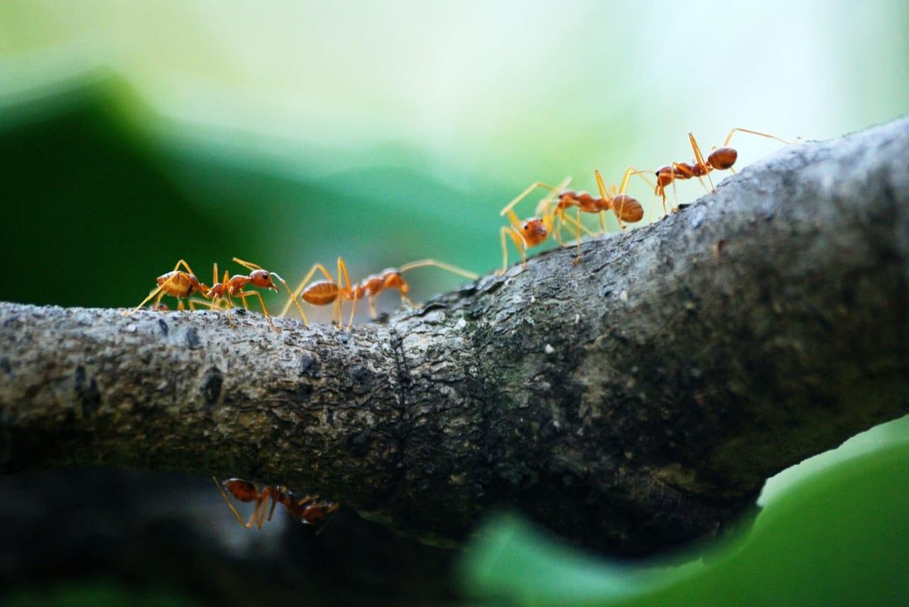Cómo mantener alejadas a las hormigas