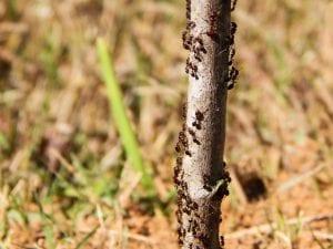 Hormigas en un tronco de árbol
