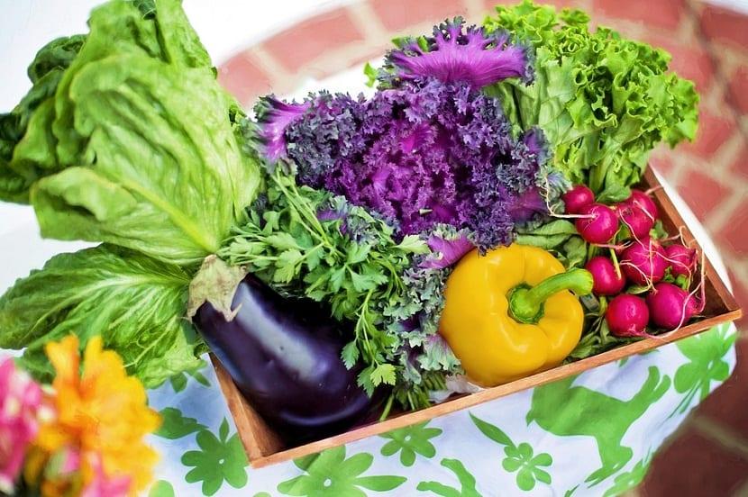 diferentes hortalizas