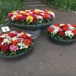 Planta tus Kalanchoe en jardineras para decorar tu jardín