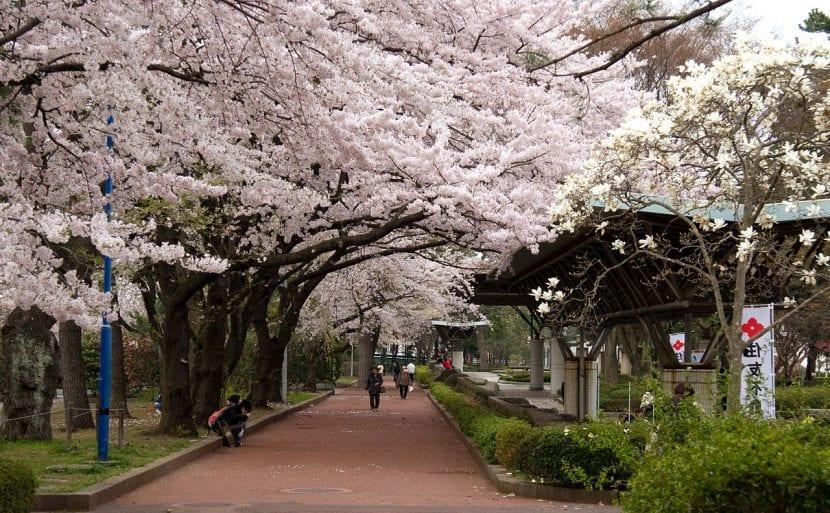 Parque Tsutsujigaoka en Japón