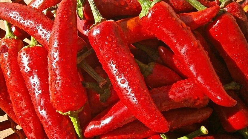 pimientos rojos sanos