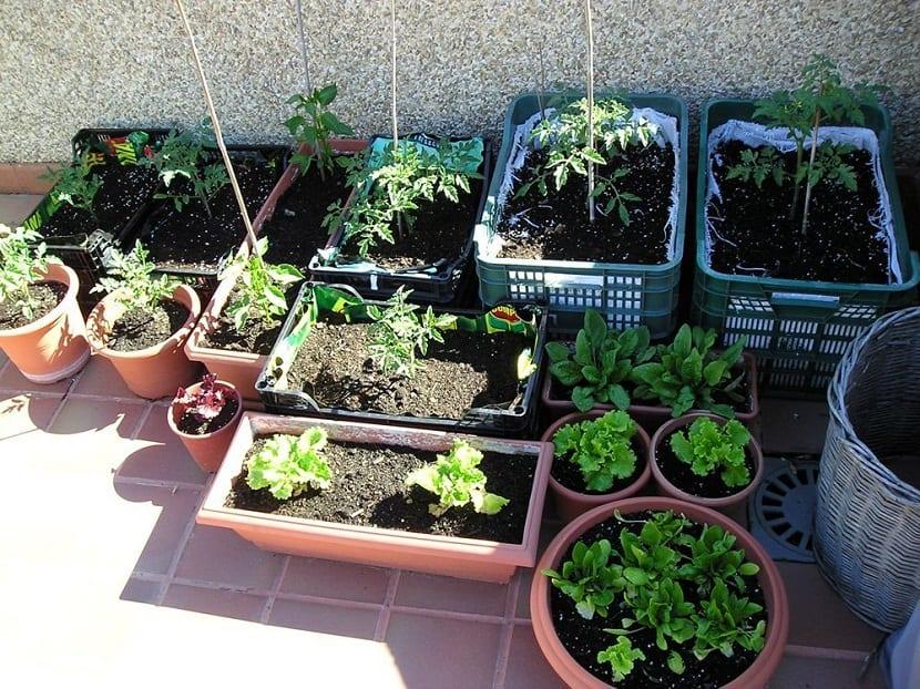 crear un huerto en macetas