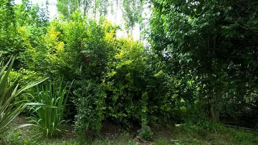 plantas a colocar en el cerco verde