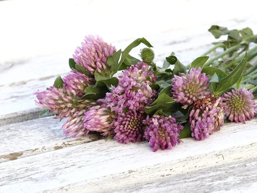 plantas medicinales con beneficios para la salud