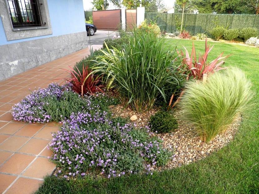 Tipos de plantas tapizantes for Plantas exoticas para jardin