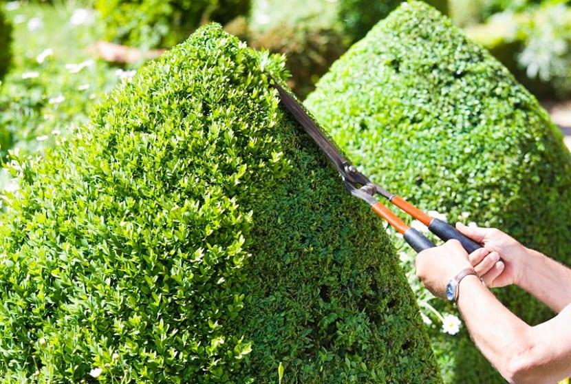 Cu ndo podar las plantas le osas - Poda de hortensias epoca ...