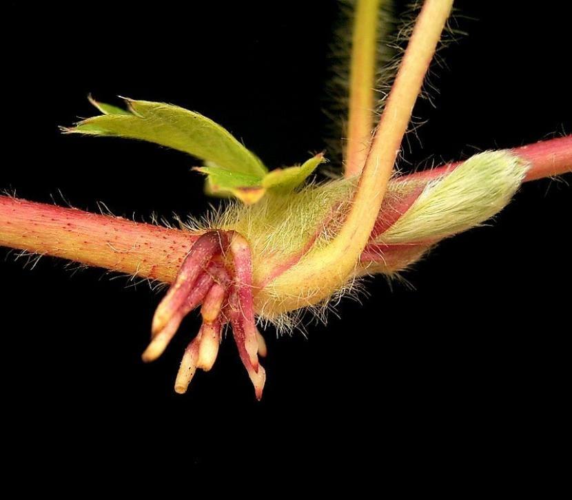 Raíces de la planta