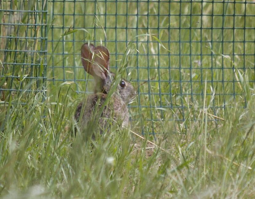 Rejilla y conejo en un jardín