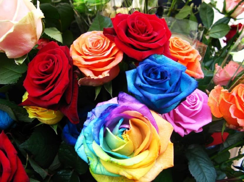 rosas dia de la madre
