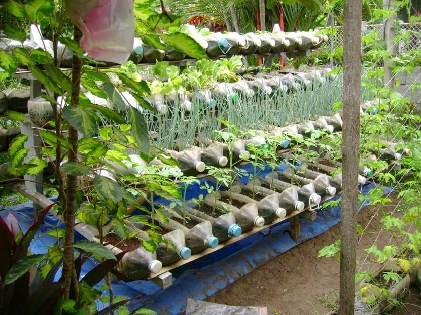 plantar plantas en botellas