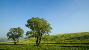 Árboles en el campo