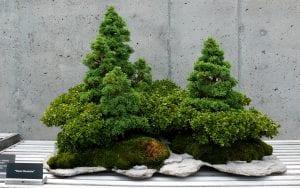 Bonsái de arbustos