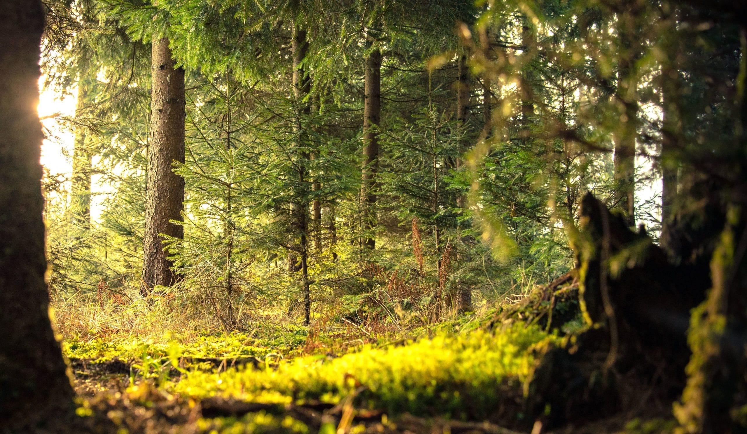 Árboles de un bosque